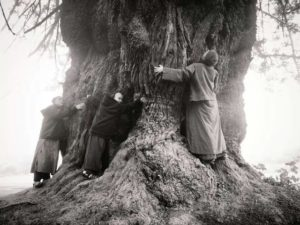 Monastics hugging tree